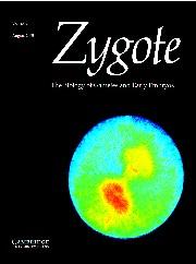Zygote Volume 13 - Issue 3 -