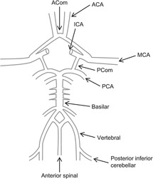 Neurophysiology (Section 4) - Basic Physiology for Anaesthetists