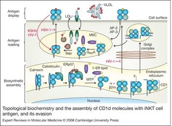 ltp mecanismo molecular de la diabetes