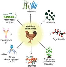 Alternatives To Antibiotics For Maximizing Growth