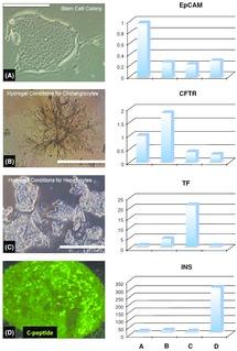 Enabling Technologies for Regenerative Pharmacology (Section