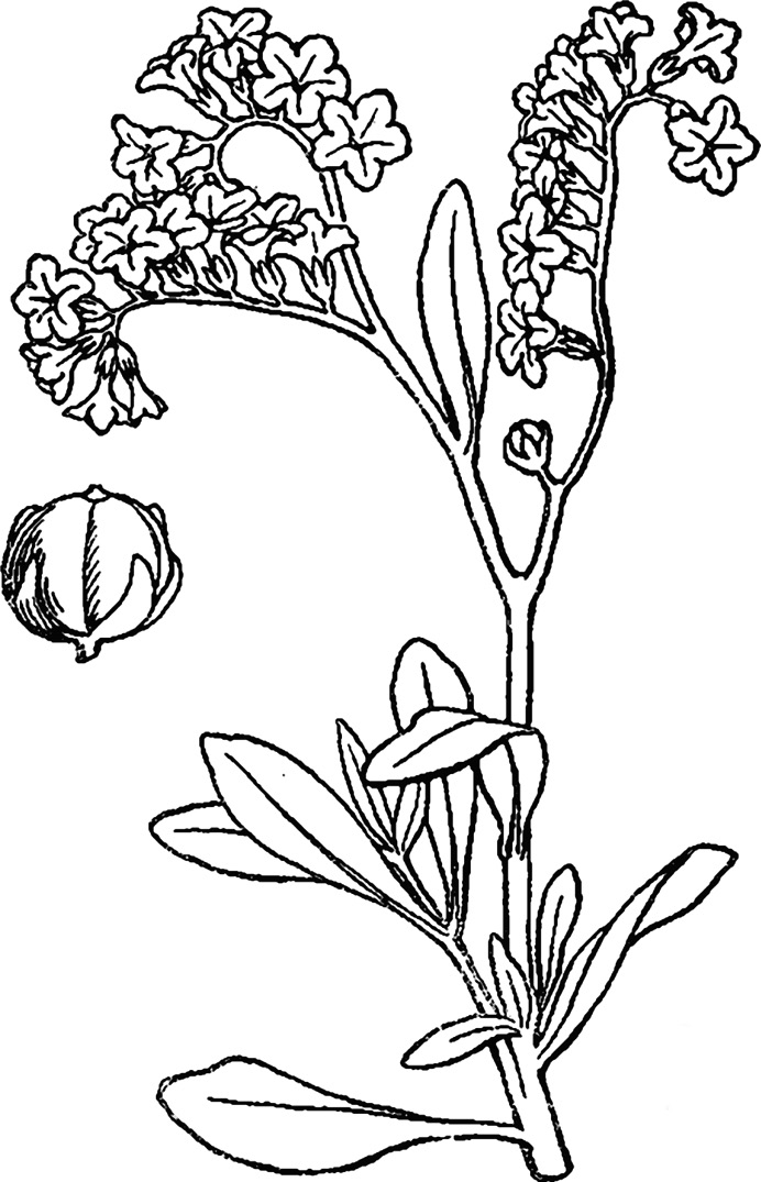 Botany Set flowers Drawing engraving Vector victorian Illustration ... | 1075x692