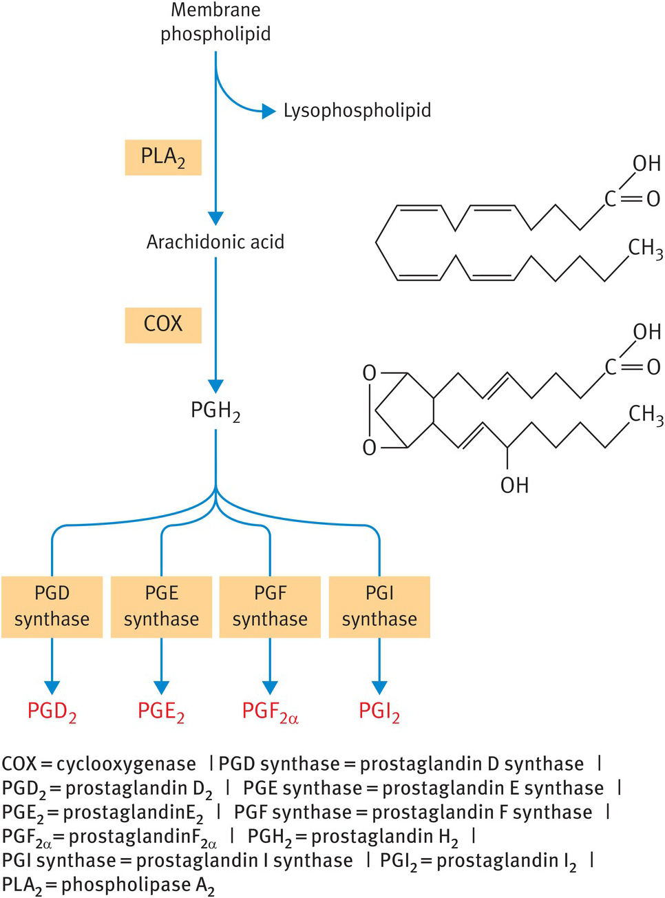 Pgh steroids beginners steroids cycle