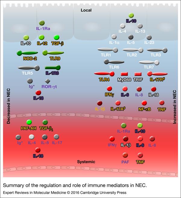 The immunological landscape in necrotising enterocolitis