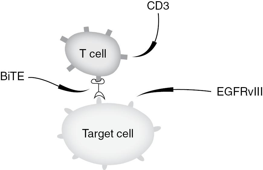 Immunotherapy for gliomas (Chapter 5) - The Duke Glioma Handbook