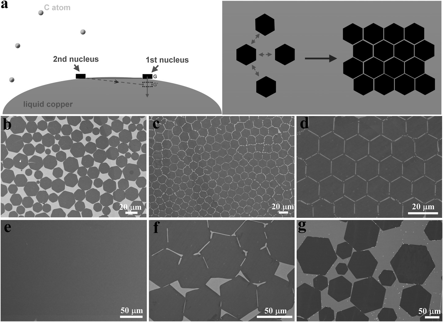 Controlled Growth of Graphene Crystals by Chemical Vapor