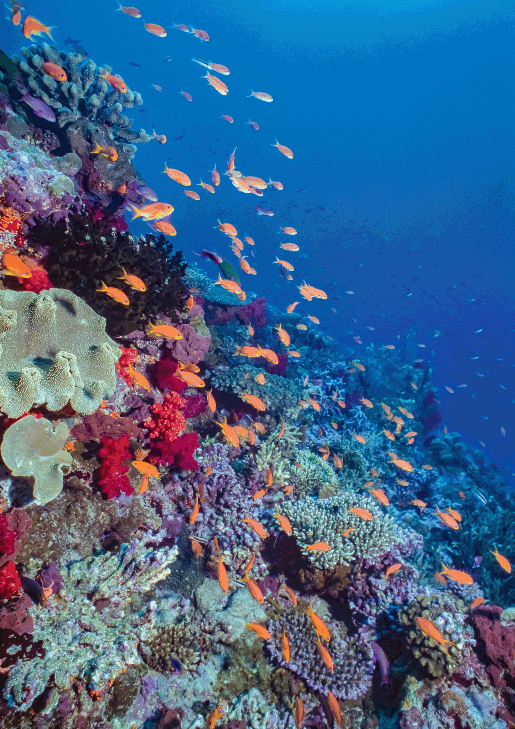 Coral Reefs (Chapter 13) - Marine Conservation
