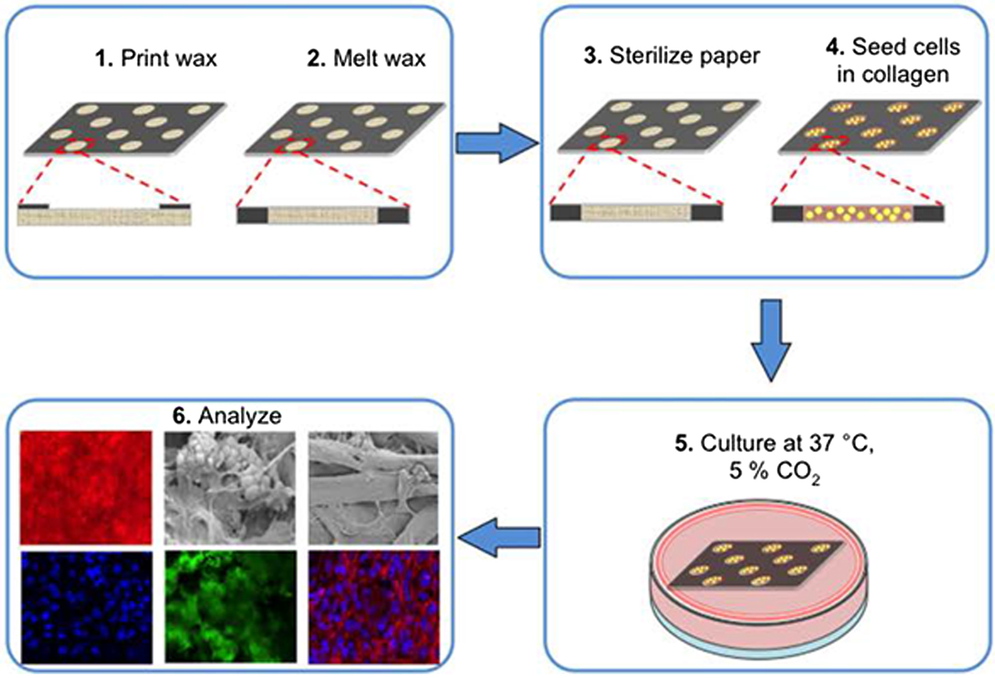 Master thesis cell culture
