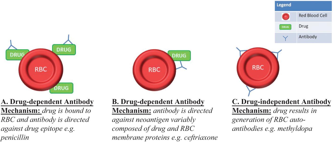 Hemolytic Anemias (Section 3, Part D) - Anemia