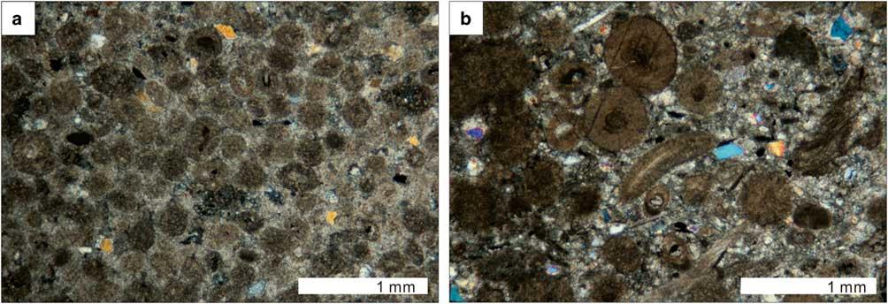Sedimentary breccia and diamictite of the Cambrian Spurs