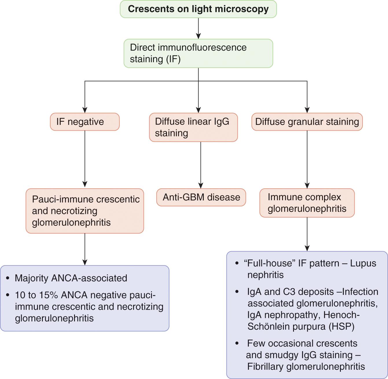 vasculitis pauci-immune