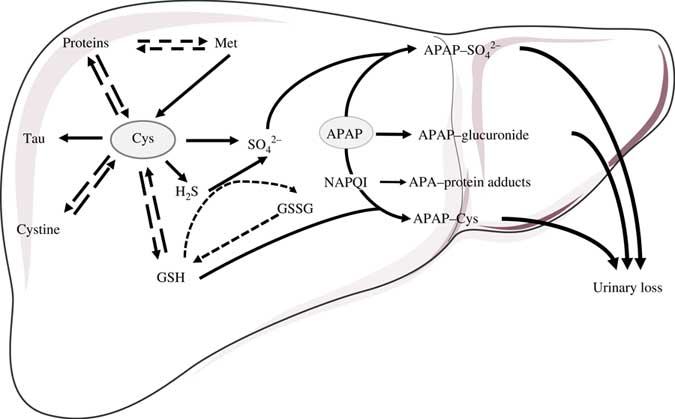 Impact of medication on protein and amino acid metabolism in