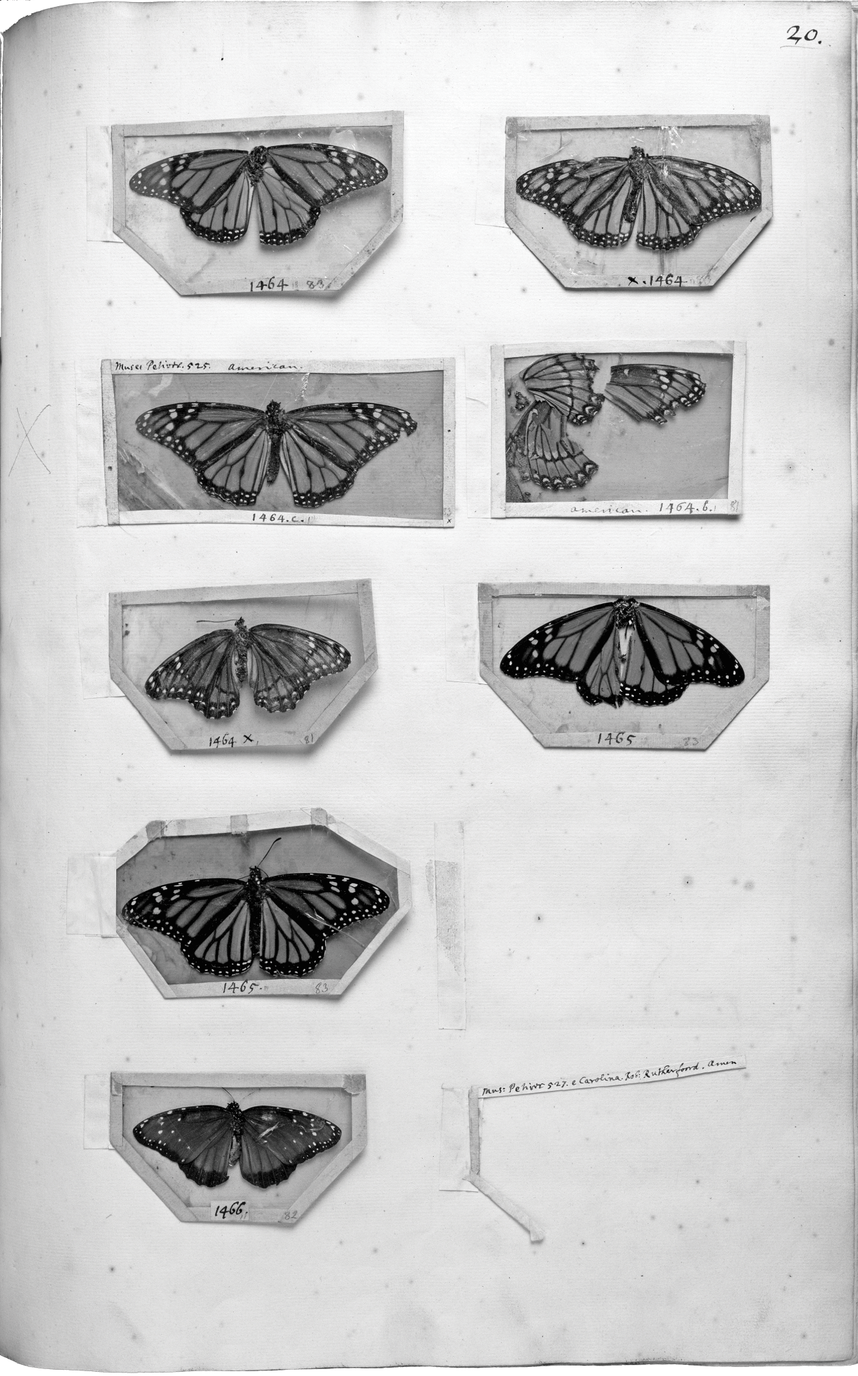 Set of 2 x Natural History Prints 18th Century Insects Pictures Reprints