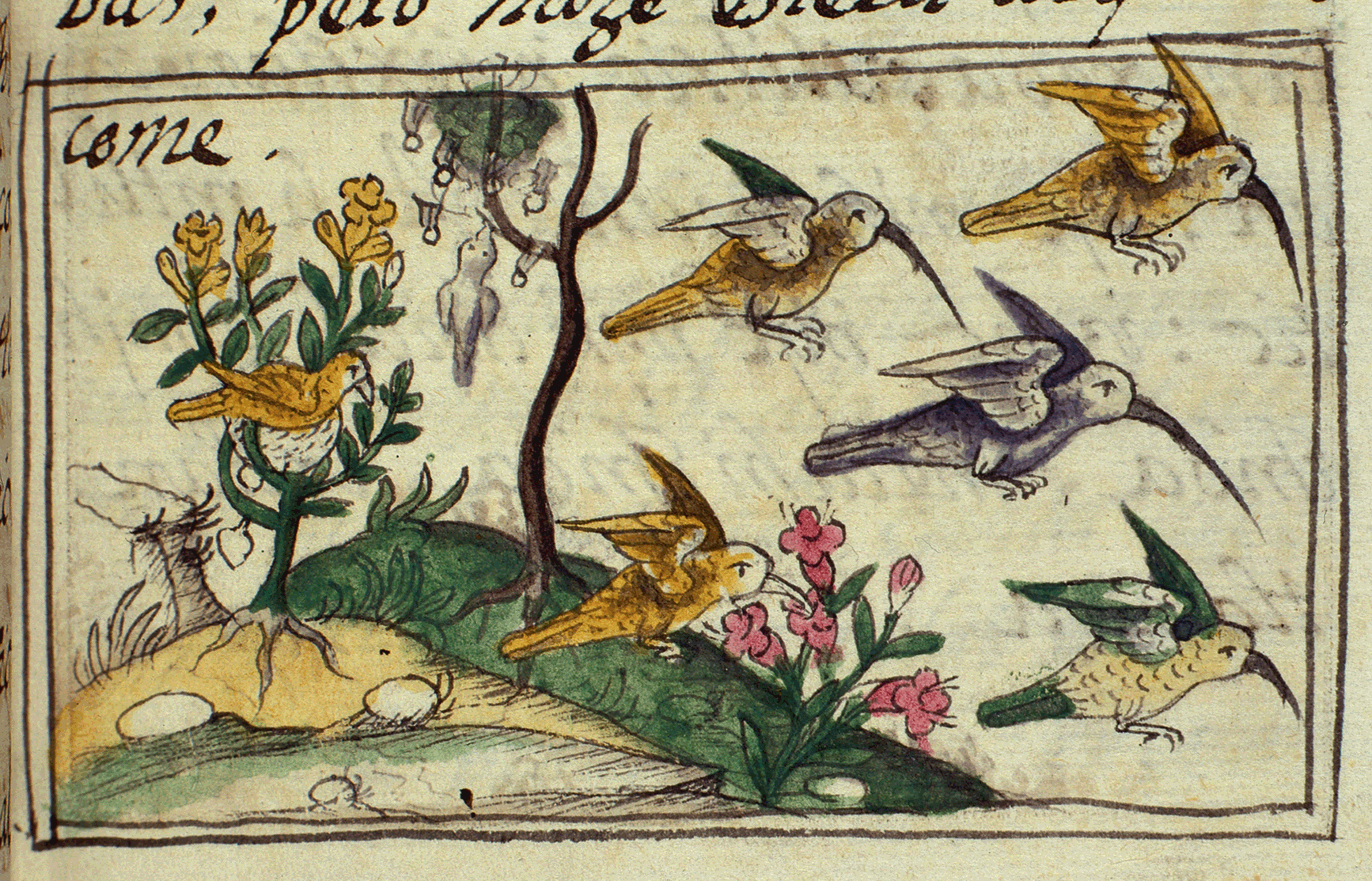 Early Modern Ventures I Worlds Of Natural History