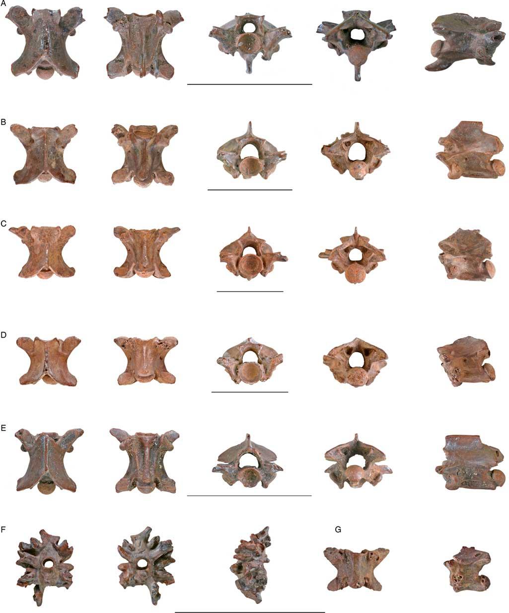 Pleistocene amphibians and squamates from the Upper Jordan