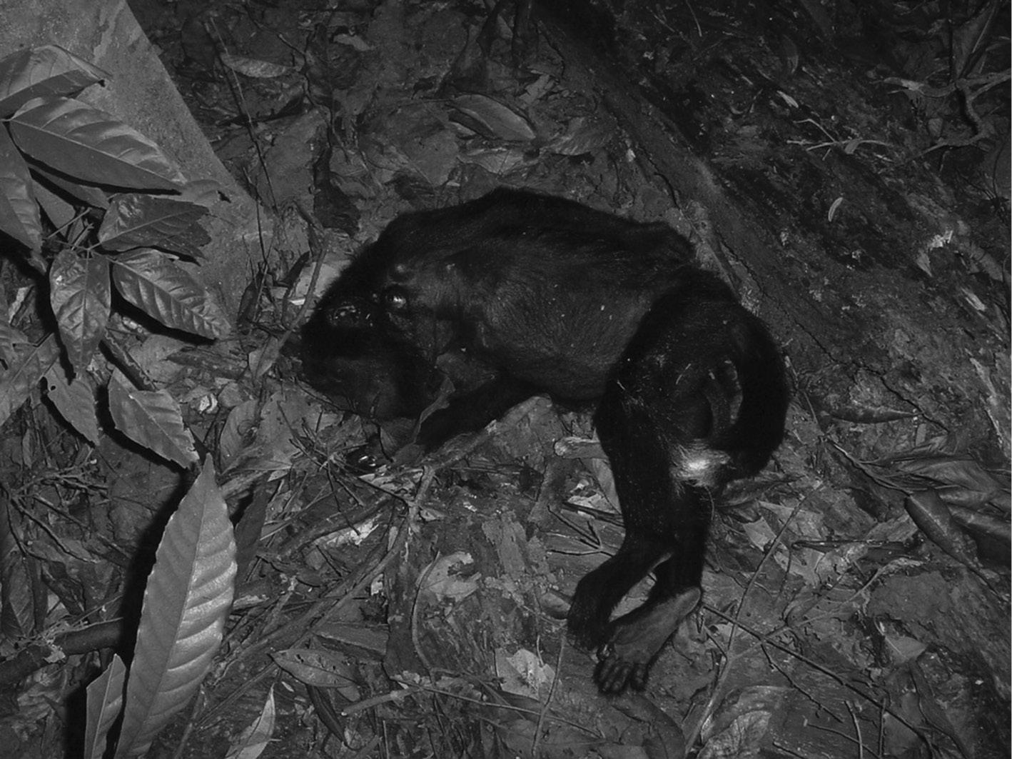 Conservation Case Studies (Part VI) - Primates in Flooded Habitats
