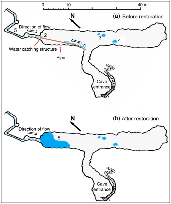 Even worms matter: cave habitat restoration for a planarian