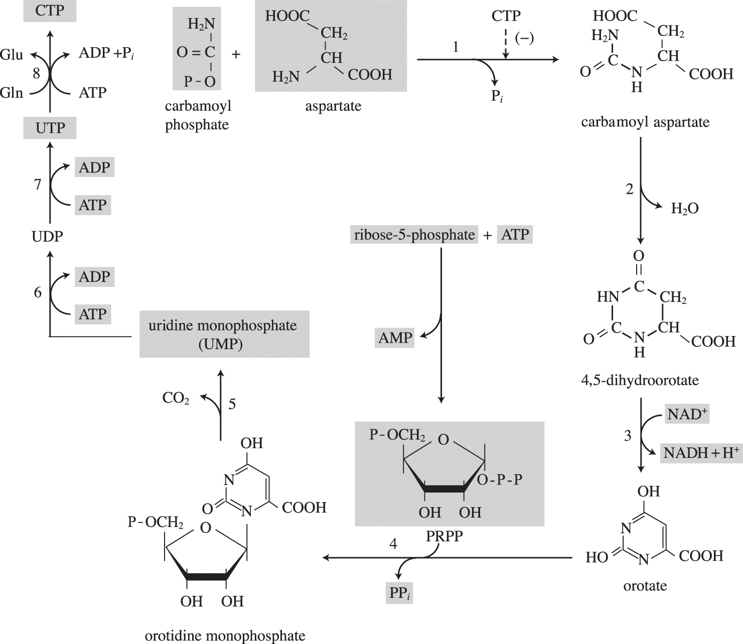 Biosynthesis and growth (Chapter 6) - Prokaryotic Metabolism