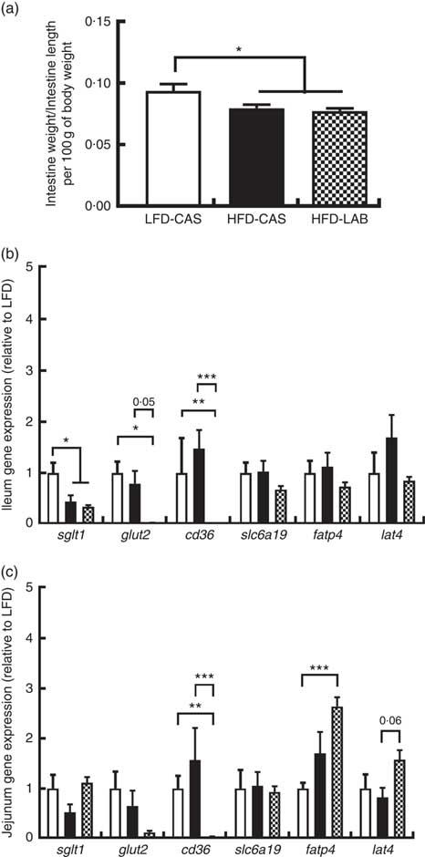 Dietary α-lactalbumin alters energy balance, gut microbiota