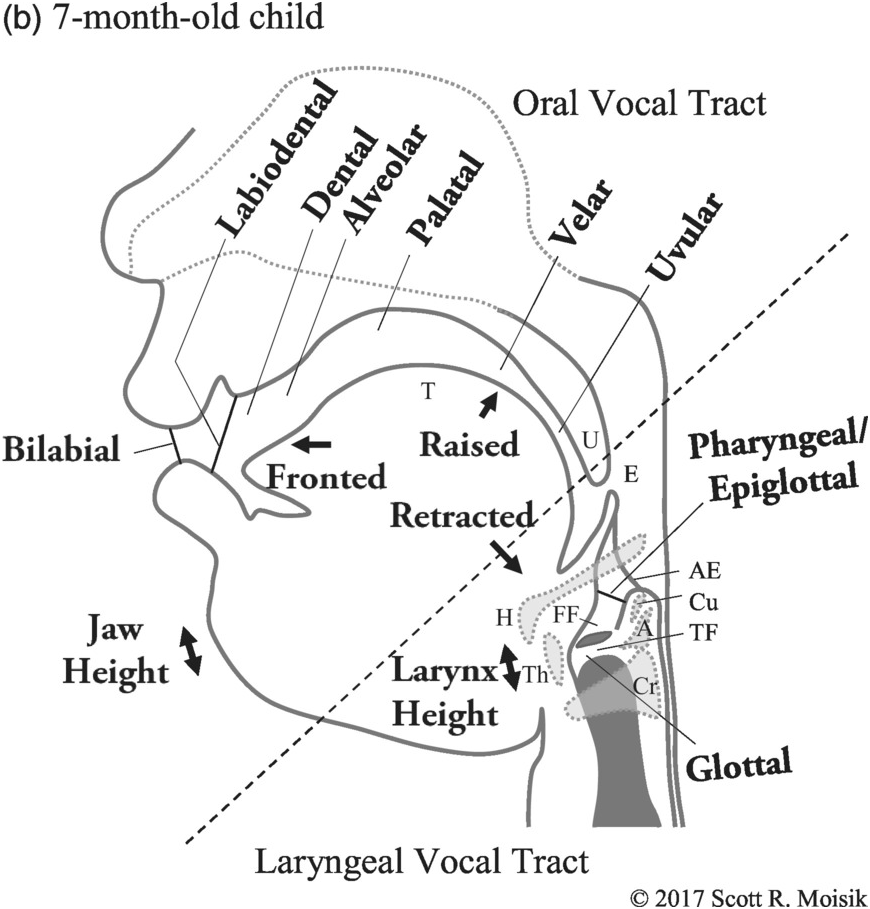 Infant Acquisition of Speech and Voice Quality (Chapter 6