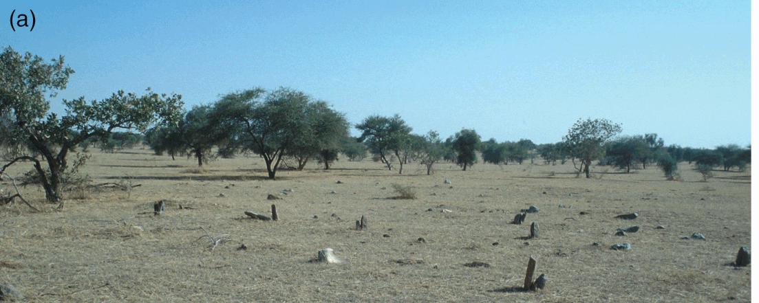 Burial and Society at Kissi, Burkina Faso (Chapter 12