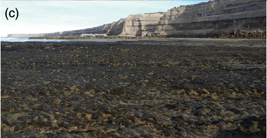 Biodiversity And Interactions On The Intertidal Rocky Shores