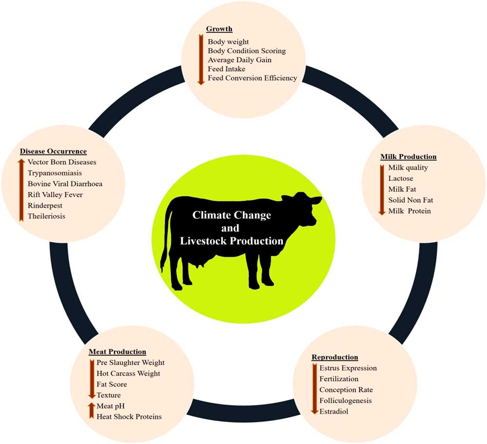 Review Adaptation of animals to heat stress   animal   Cambridge Core