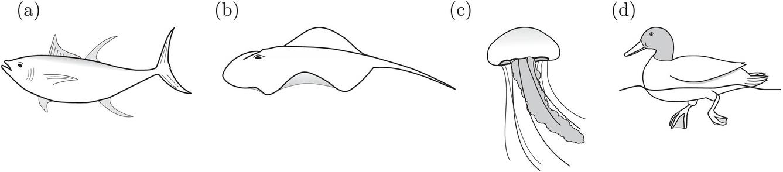 Perciformes - an overview | ScienceDirect Topics