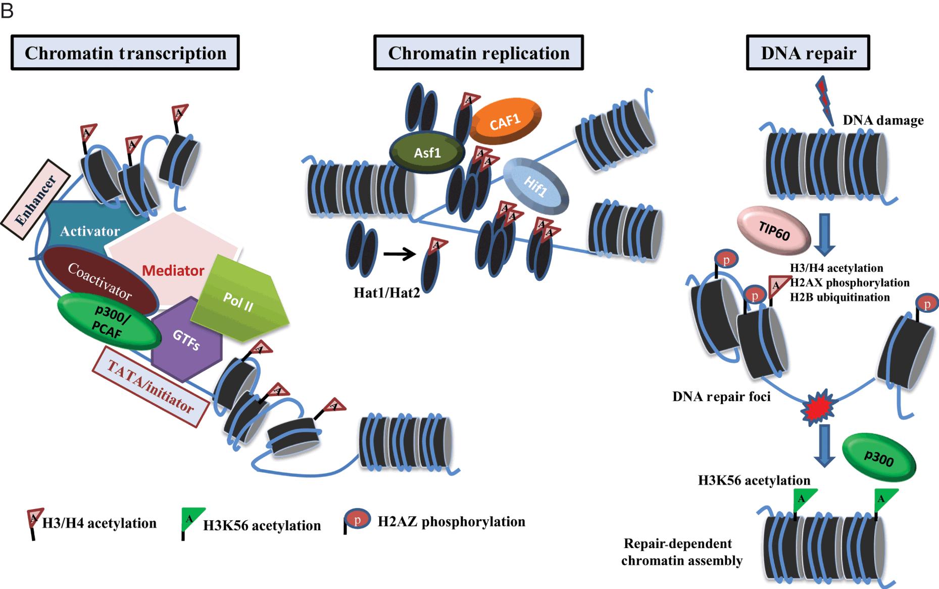 Epigenomics in disease biology (Part IV) - Epigenomics