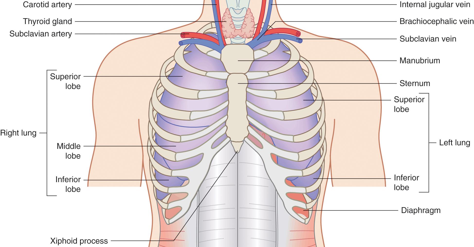 Diagnostic ultrasound (Section 2) - Pediatric Emergency