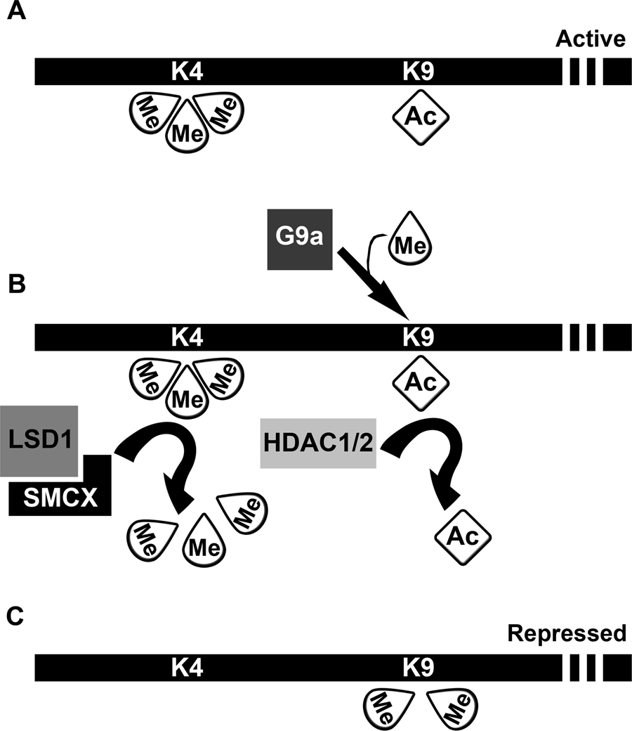Epigenomic imprinting and stem cells (Part II) - Epigenomics