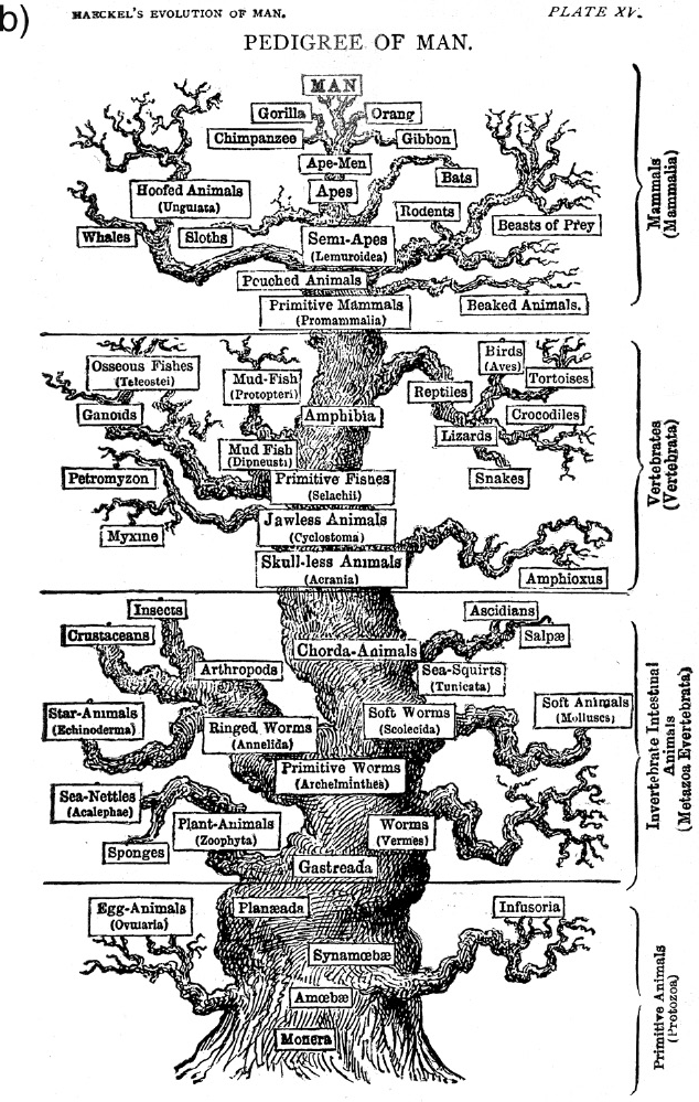 The 'non-Darwinian' revolution and the Great Chain of