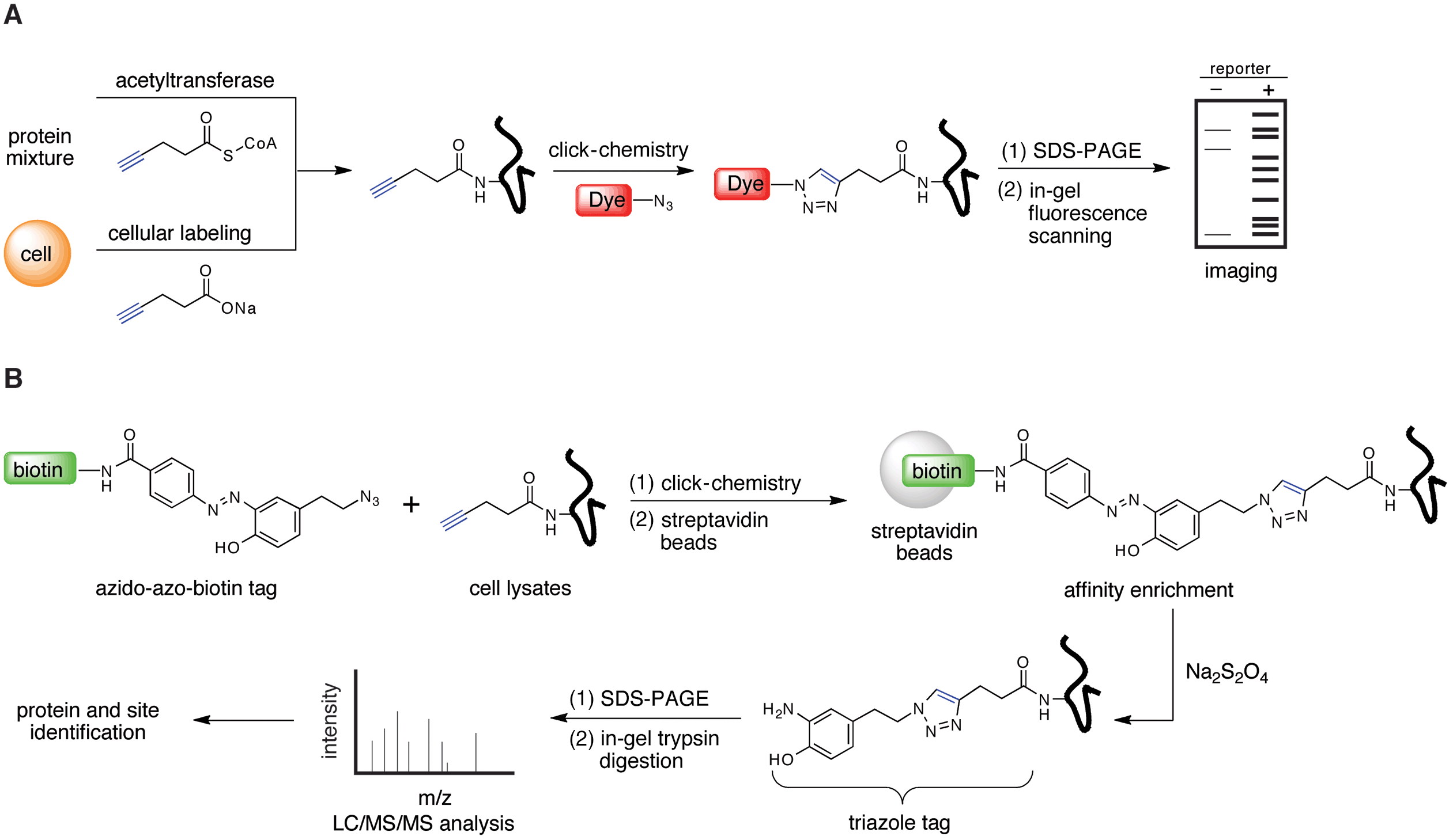 Enigmatic Chemical Tag Is Altered In >> Basics Of Chromatin Biology And Biochemistry Part I