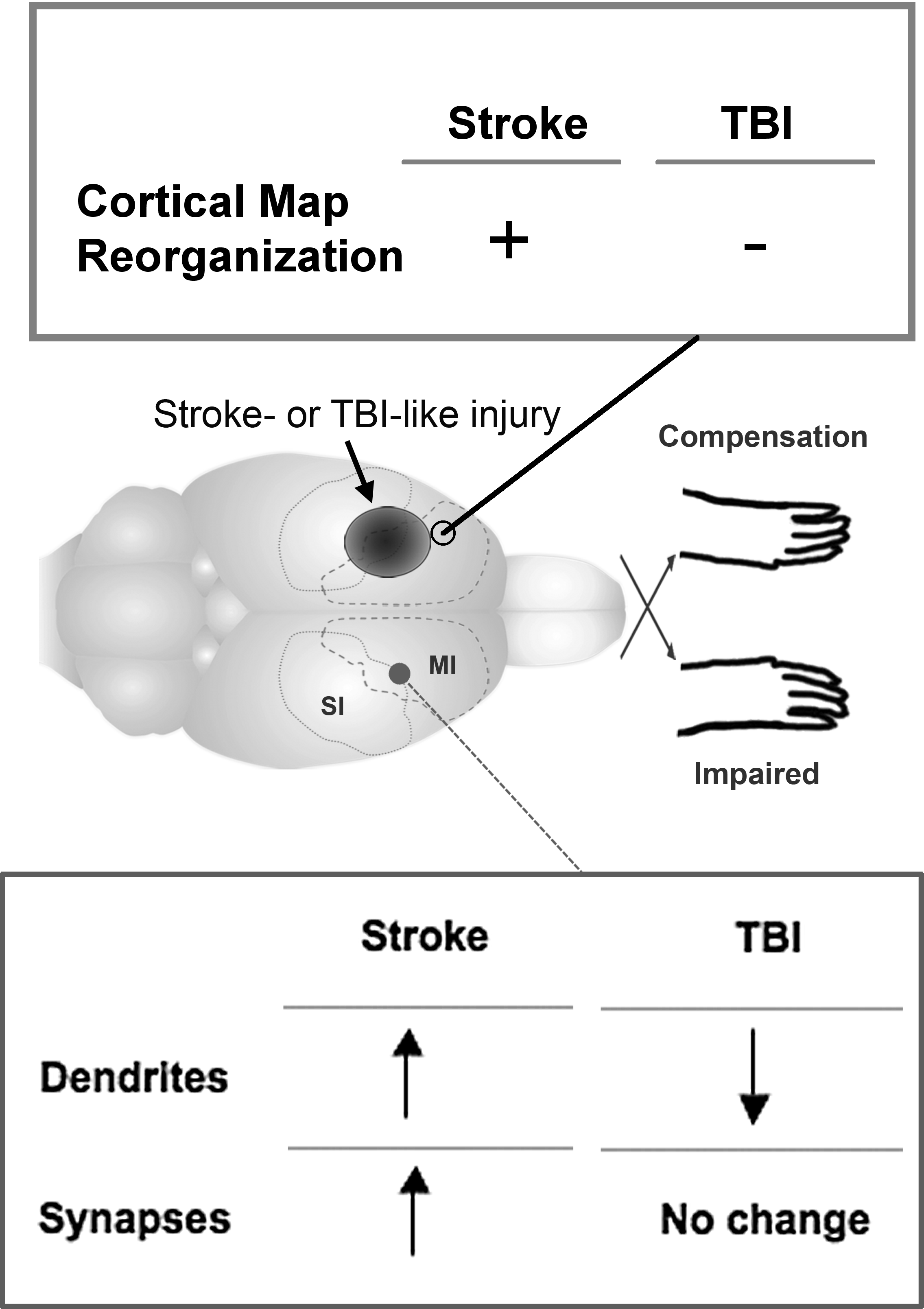 Traumatic Brain Injury (Section 1) - Traumatic Brain and