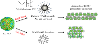 Self-assembly of P22 protein cages with polyamidoamine dendrimer and