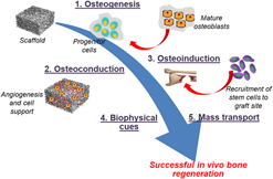 Regenerative medicine: Induced pluripotent stem cells and their