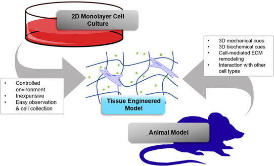 Shooting for the moon: using tissue-mimetic hydrogels to gain new