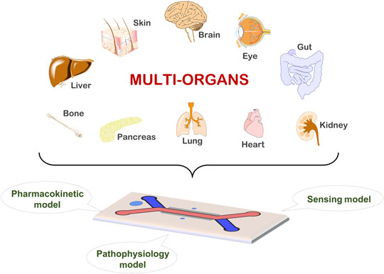 Multi-organ on a chip for pers...