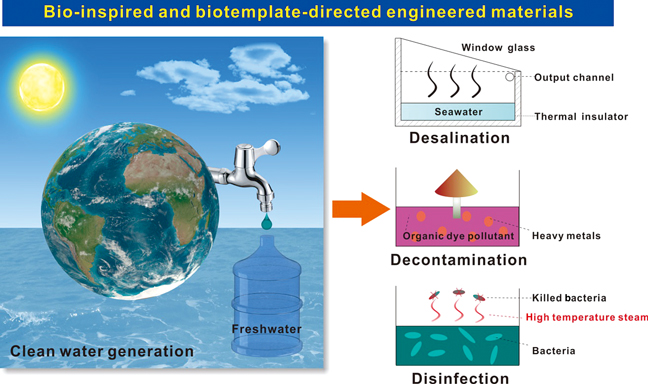 A Perspective On Bio Inspired Interfacial Systems For Solar