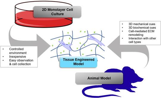 Read PDF Hyaluronan in Cancer Biology